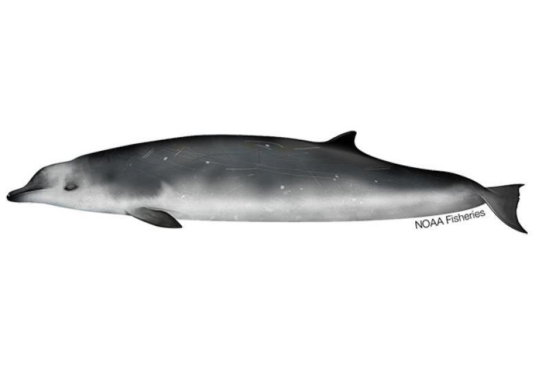 640x427-Whale_True's_Beaked_NB_W.jpg