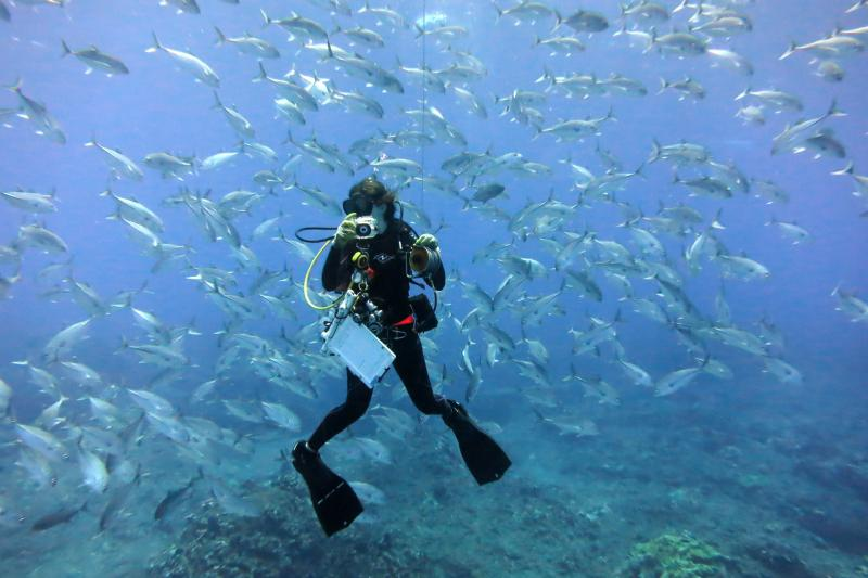 750x500-_Fish_Survey_Surrounded_By_Caranx_sexfasciatus.jpg