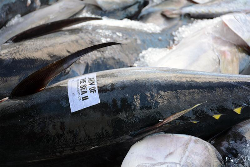 750x500-ahi-fish-auction-on-ice-NOAA-PIRO.jpg