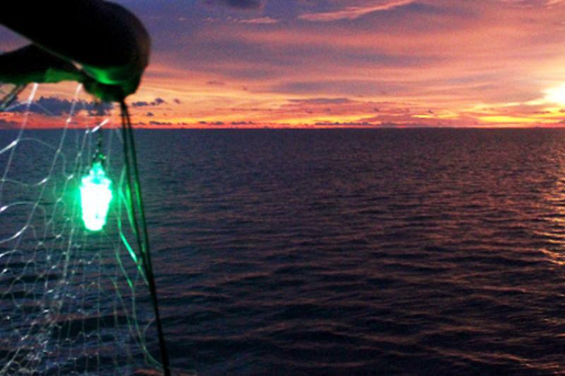 750x500-green-led-sticks-gillnets-NOAA-PIRO.jpg