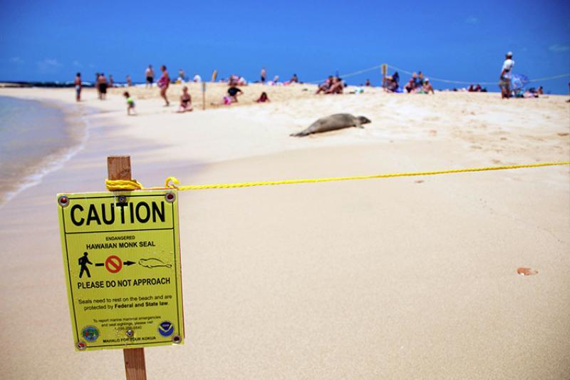 750x500-hawaiian-monk-seal-beach-caution-sign-poipu-bch-PHillman-NOAA.jpg