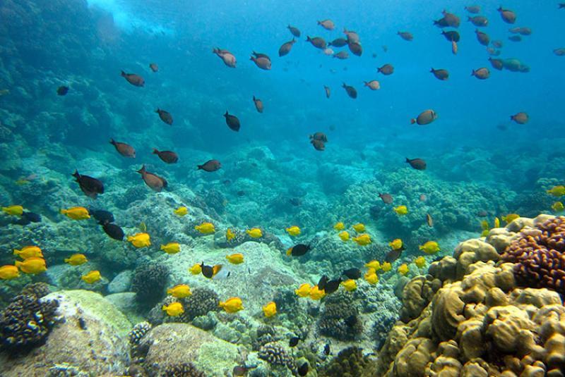 750x500-herbivores-reef-PIFSC.jpg