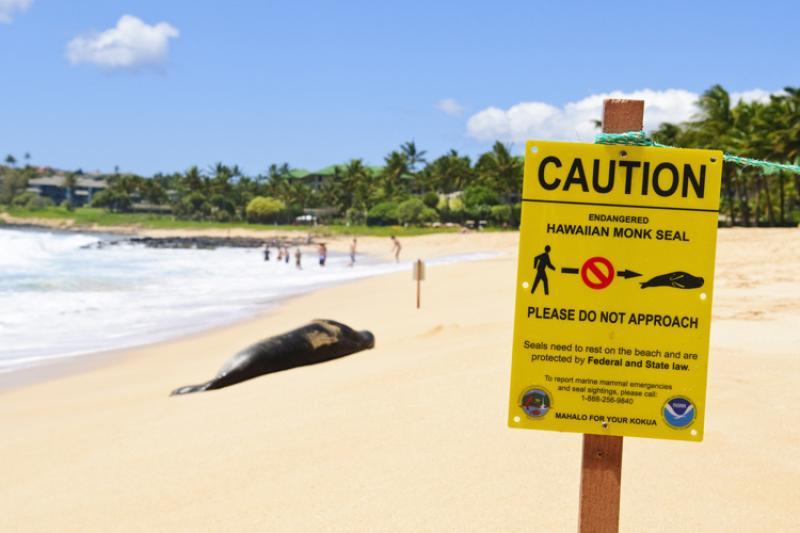 750x500-monk-seal-on-beach-istock.jpg