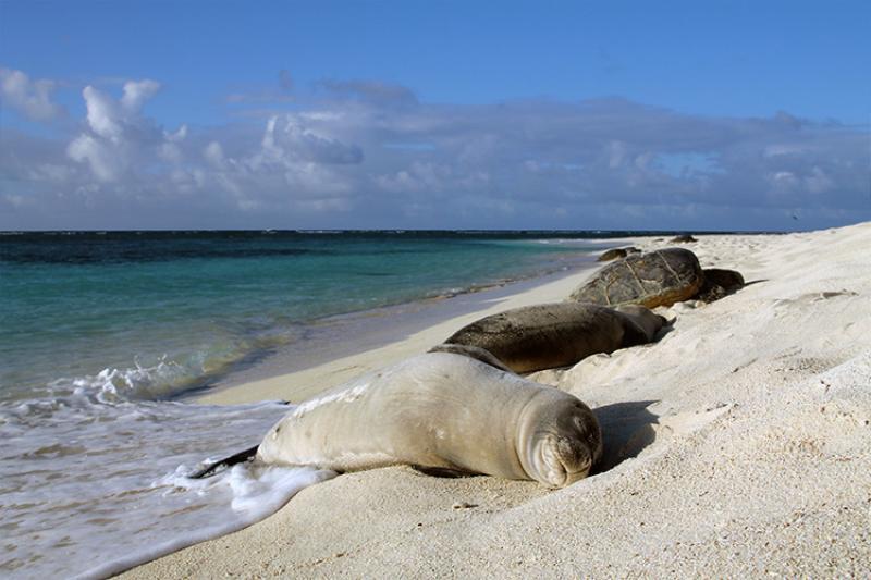750x500-monk-seal-turtle-ffs-MS-NOAA-PIFSC.jpg