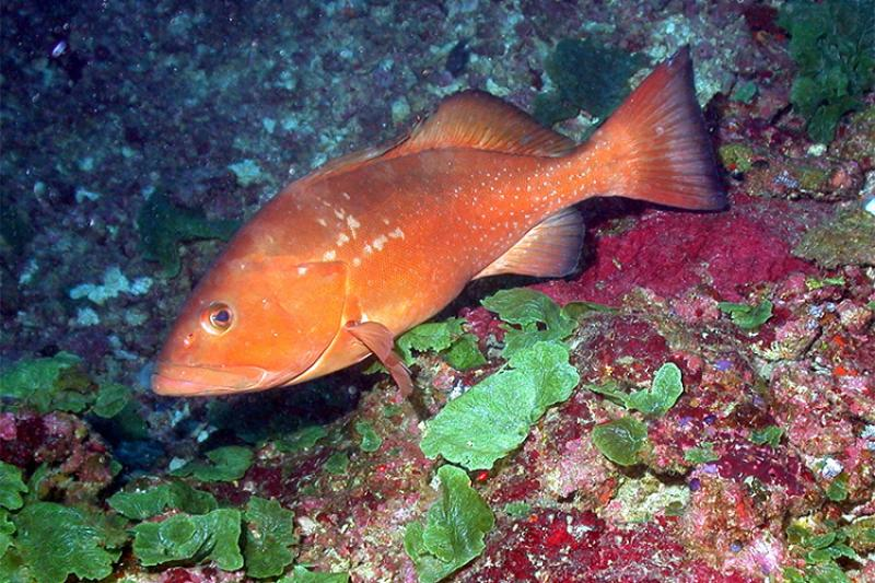 750x500-red-grouper.jpg