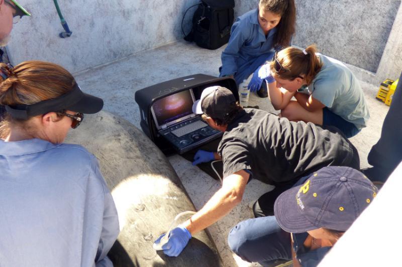 750x500-ro28-pohaku-ultrasound-noaa-irc-NOAA-PIFSC.jpg