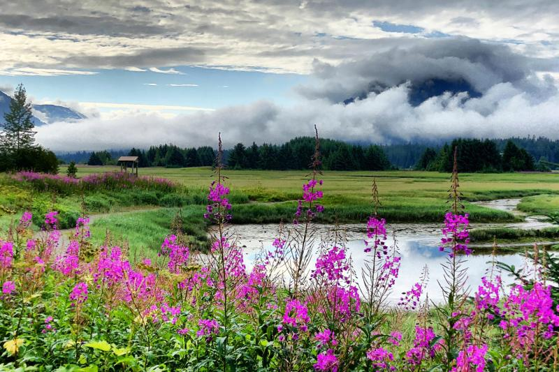 750x500-ryamada_wetlands.jpg