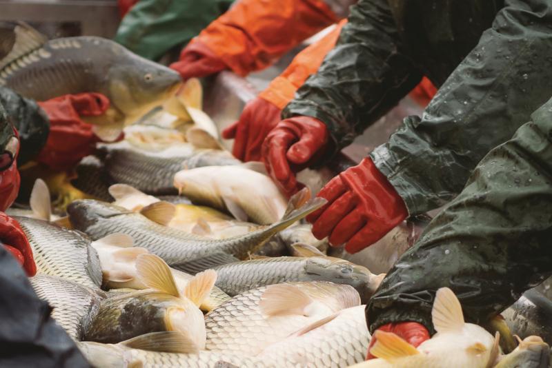 750x500-seafood-processing-line-SI.jpg