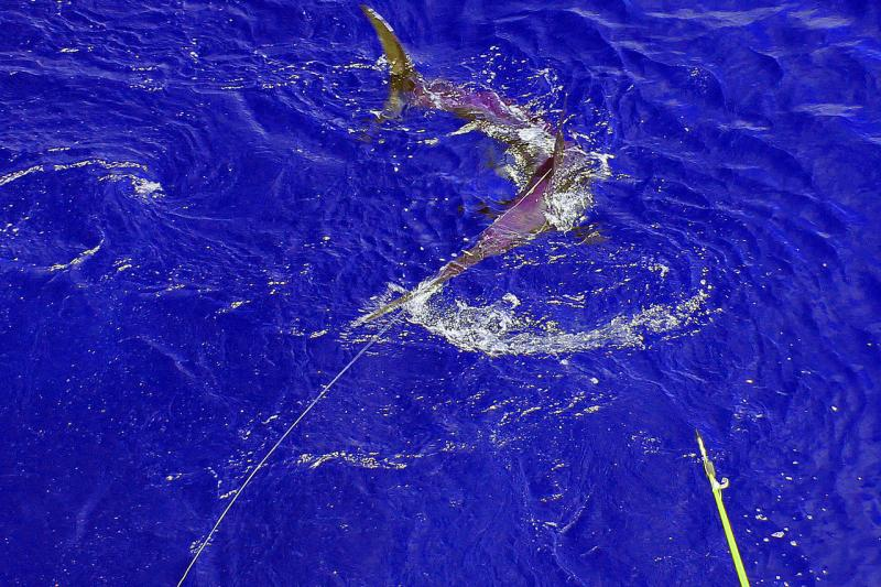 750x500-swordfish-fishing.jpg