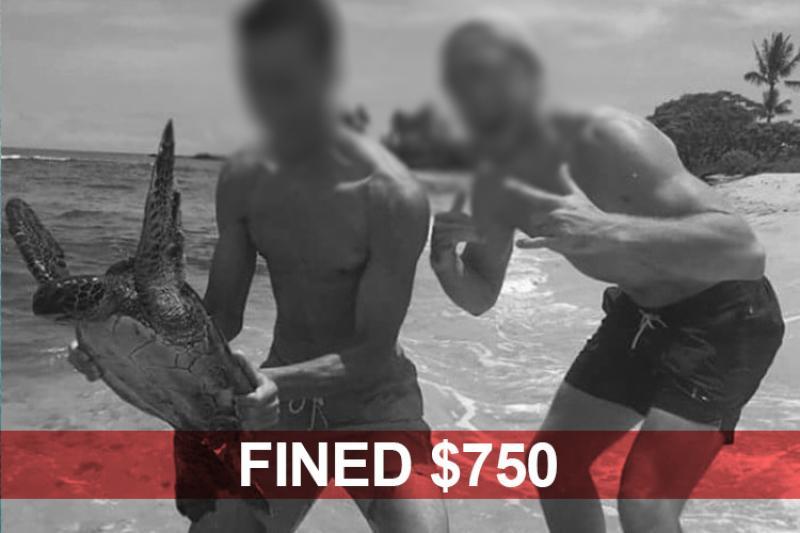 750x500-turtle-harrasment-fined-NOAA-PIRO.jpg