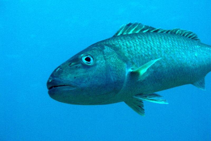 750x500-uku-swimming-PISFC.png