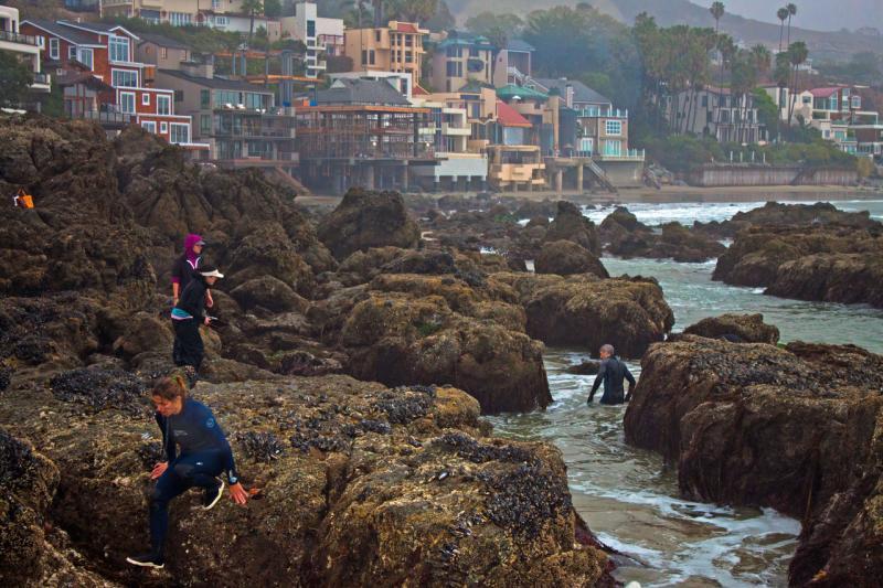 People surveying abalone on a rocky coastline