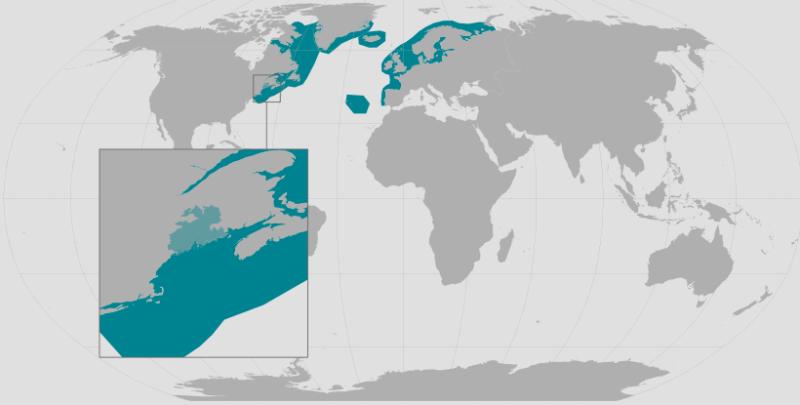 Atlantic Salmon Range_rev.png