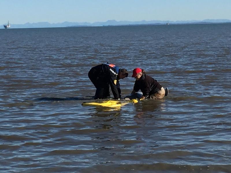beluga-rescue-from-water.jpg