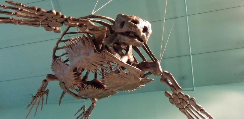 Big_fossil_turtle_Rotator.jpg