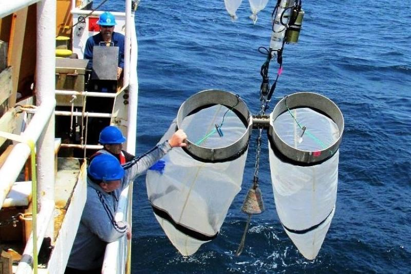 Two men in blue hardhats deploying the Bongo Nets (large nets with metal openings).