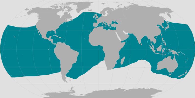 Bottlenose Dolphin Range.png