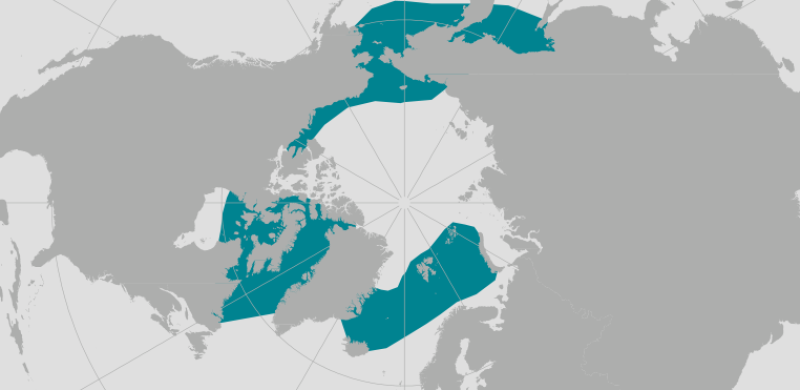 BowheadWhale_Polar_Lines_Arctic.png