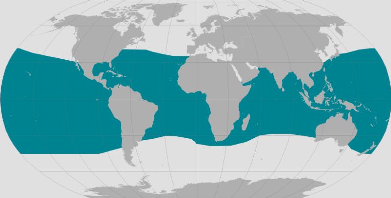 Brydes Whale Range.png