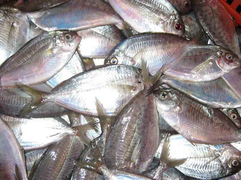 Basket of silvery butterfish