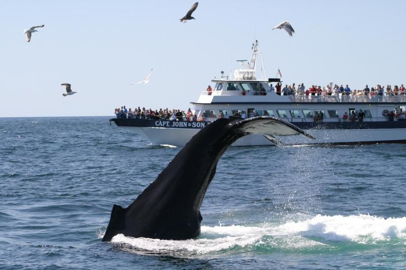 Captain-John-Boats-with-humpback-WDC.jpg