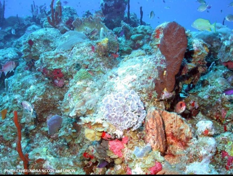 Carib-coral-SERO.png