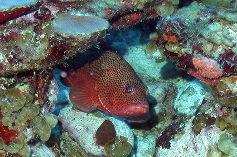 caribb_reeffish_image.jpg