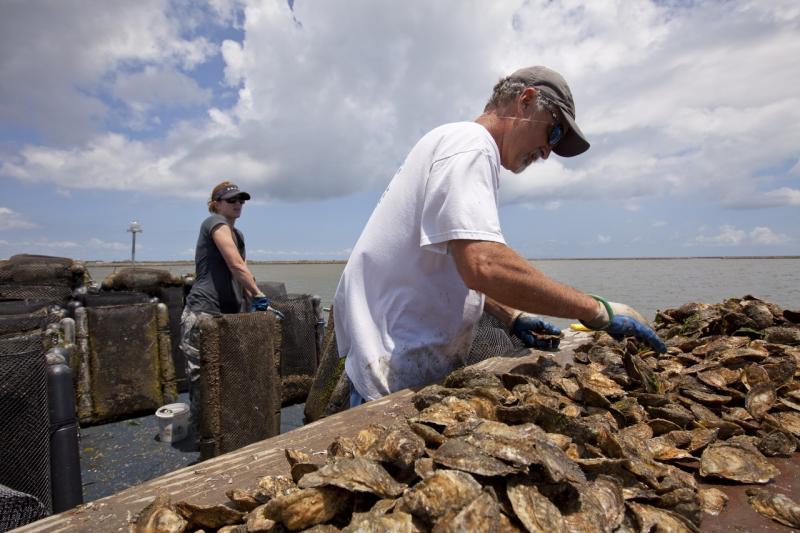 cedar-islands-oysters.jpg