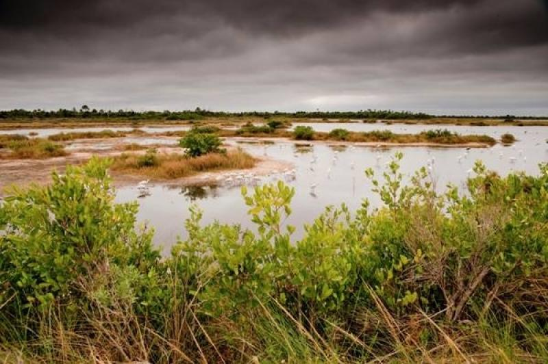 CoastalresiliencyNaturalshorelinepic1.jpg