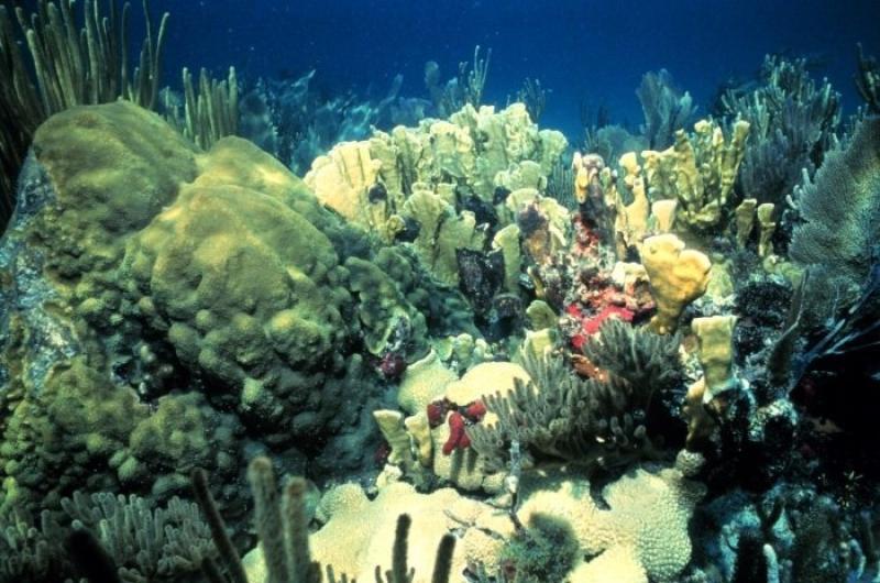 coral-GOM-NOAA-SERO.jpg