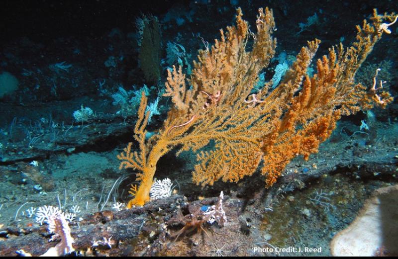 coral-SA-SERO.png
