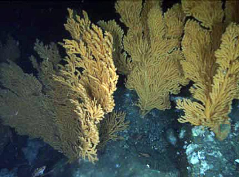 corals-00042-crop.jpg