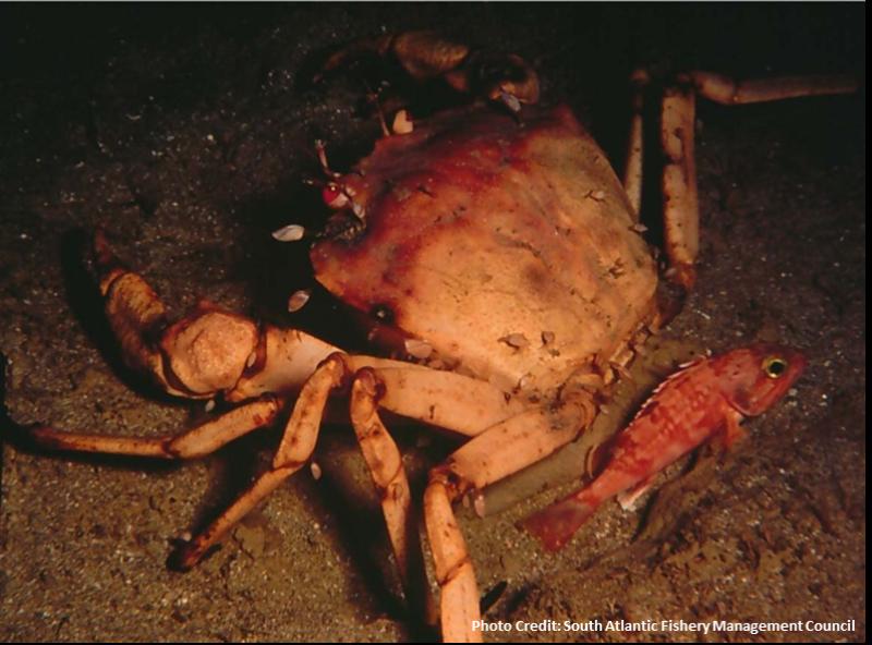 crab-SA-CFENN-SERO.png