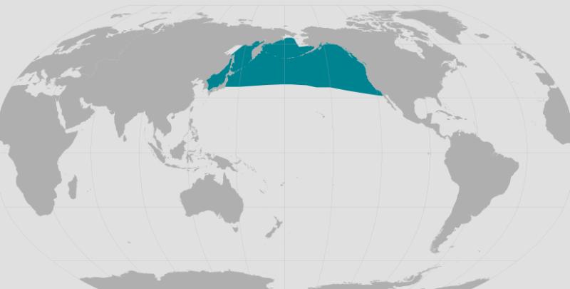 Dall's Porpoise Range.png