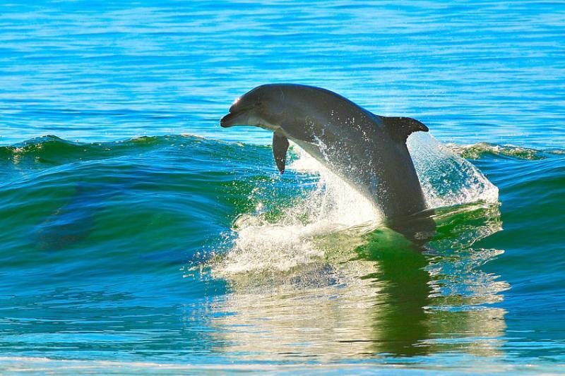 dolphin-pixabay-CC0.jpg