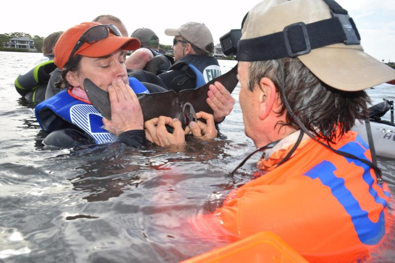 Dolphin disentangle April 2019.jpg