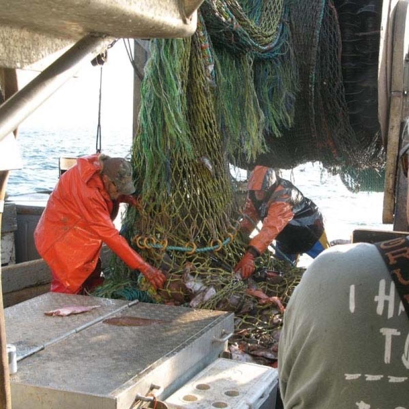 Emptying a trawl net_NOAA Fisheries_John Bullard.jpg