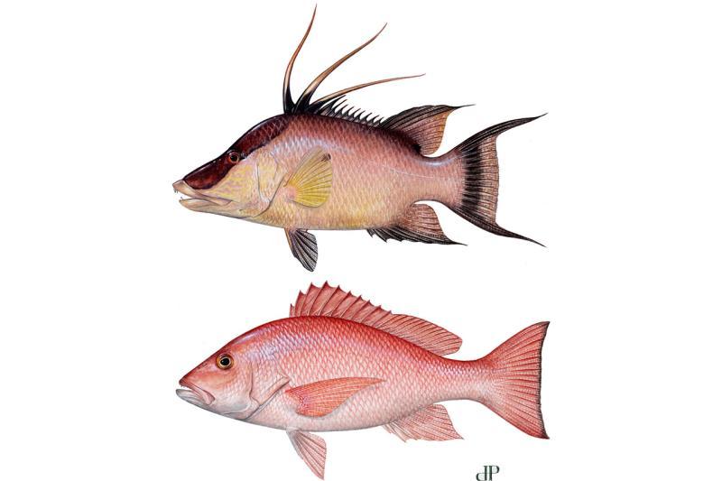 fish-LCAMP-LMAXI-illustration-DP.jpg