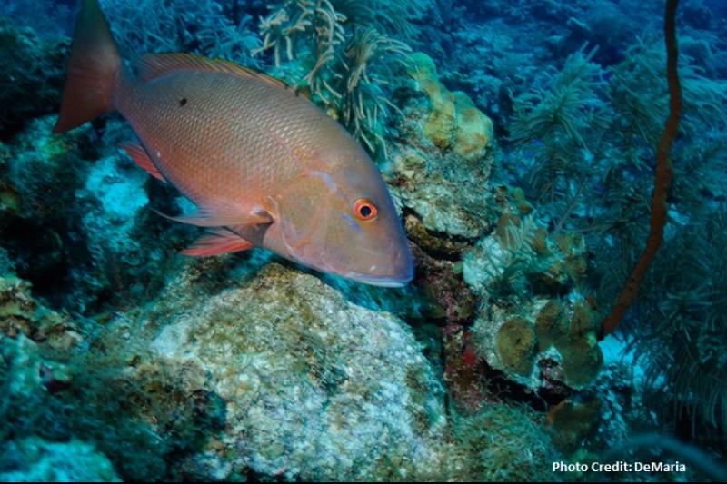 fish-SA-EMORI.png