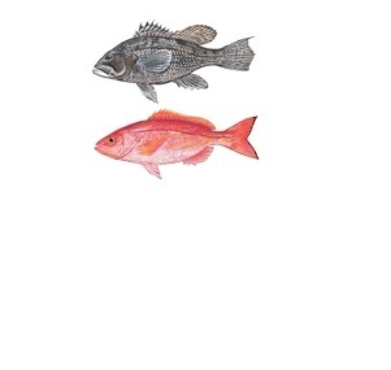 fish-vermilion-bsb-image.jpg