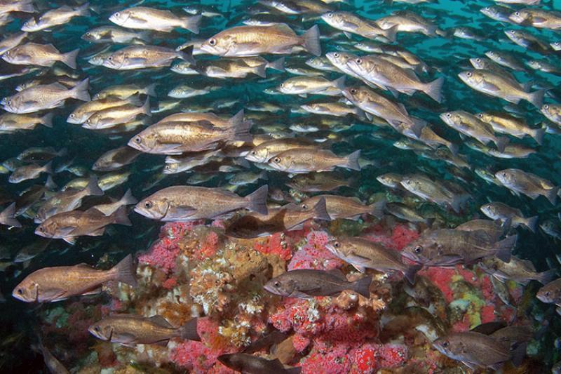 fish_header.jpg