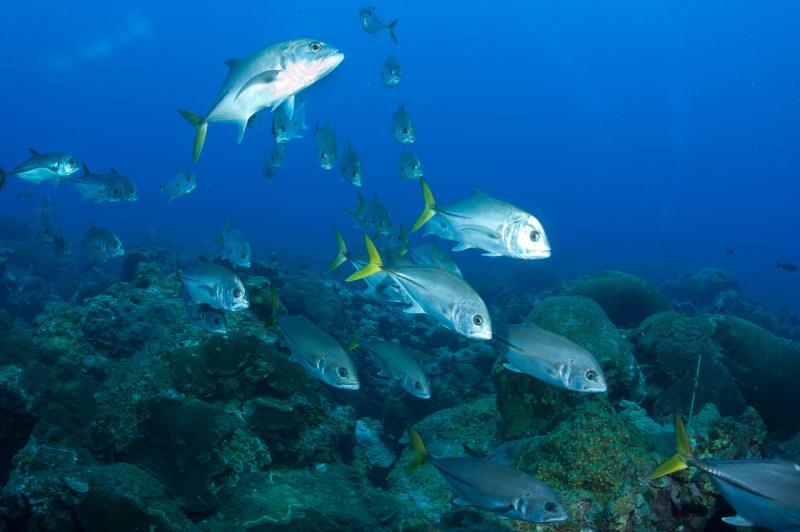 fish in the ocean.jpg