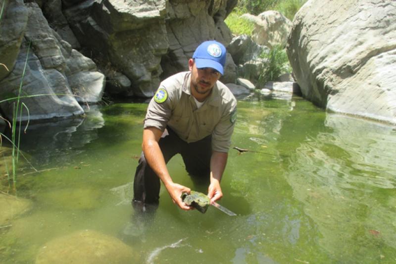 Fish Migration Vet Corps James Garcia CA 3x2.png