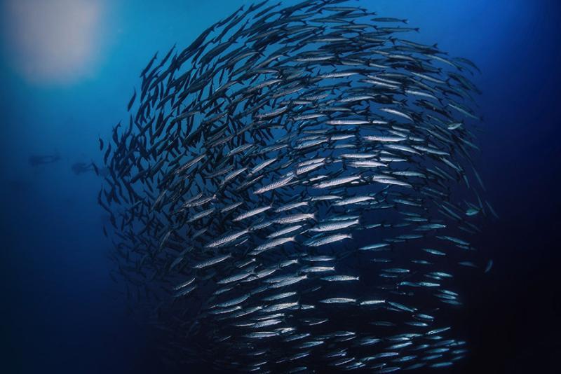 fisheries1.jpg