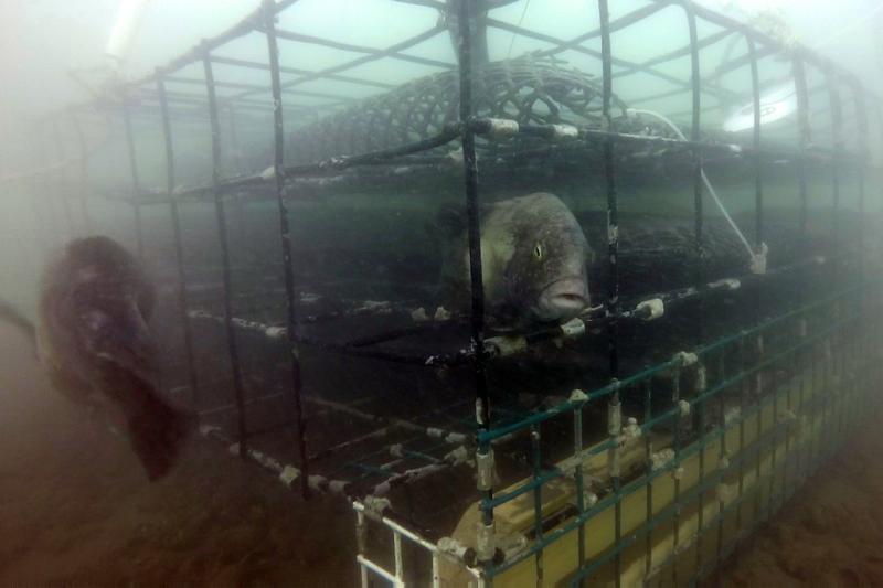 GOPR9801twoblackfish2.jpg