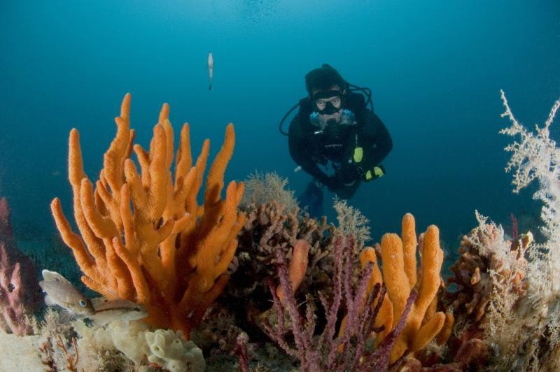 Grays Reef Georgia.jpg