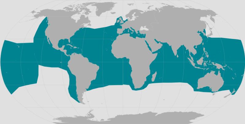 World range map for green turtle.