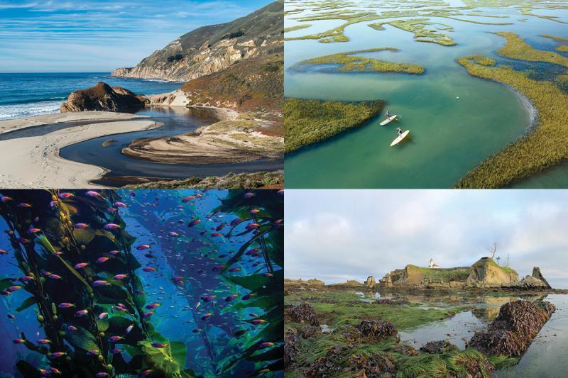 Habitat Month 2018 Public Winners Collage.jpg