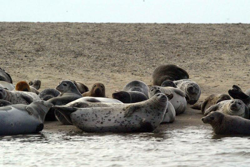 Seals at the waters edge.