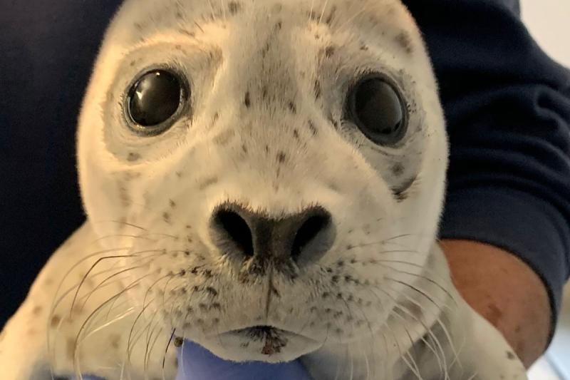 harbor-seal-pup.jpg